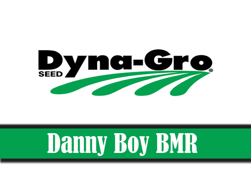 Danny Boy BMR