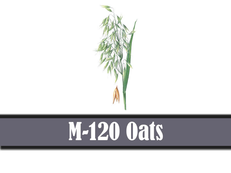 M-120 Oats